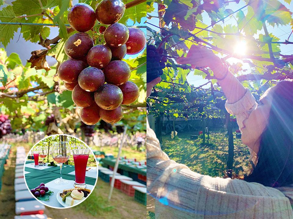新峰農場葡萄莊園